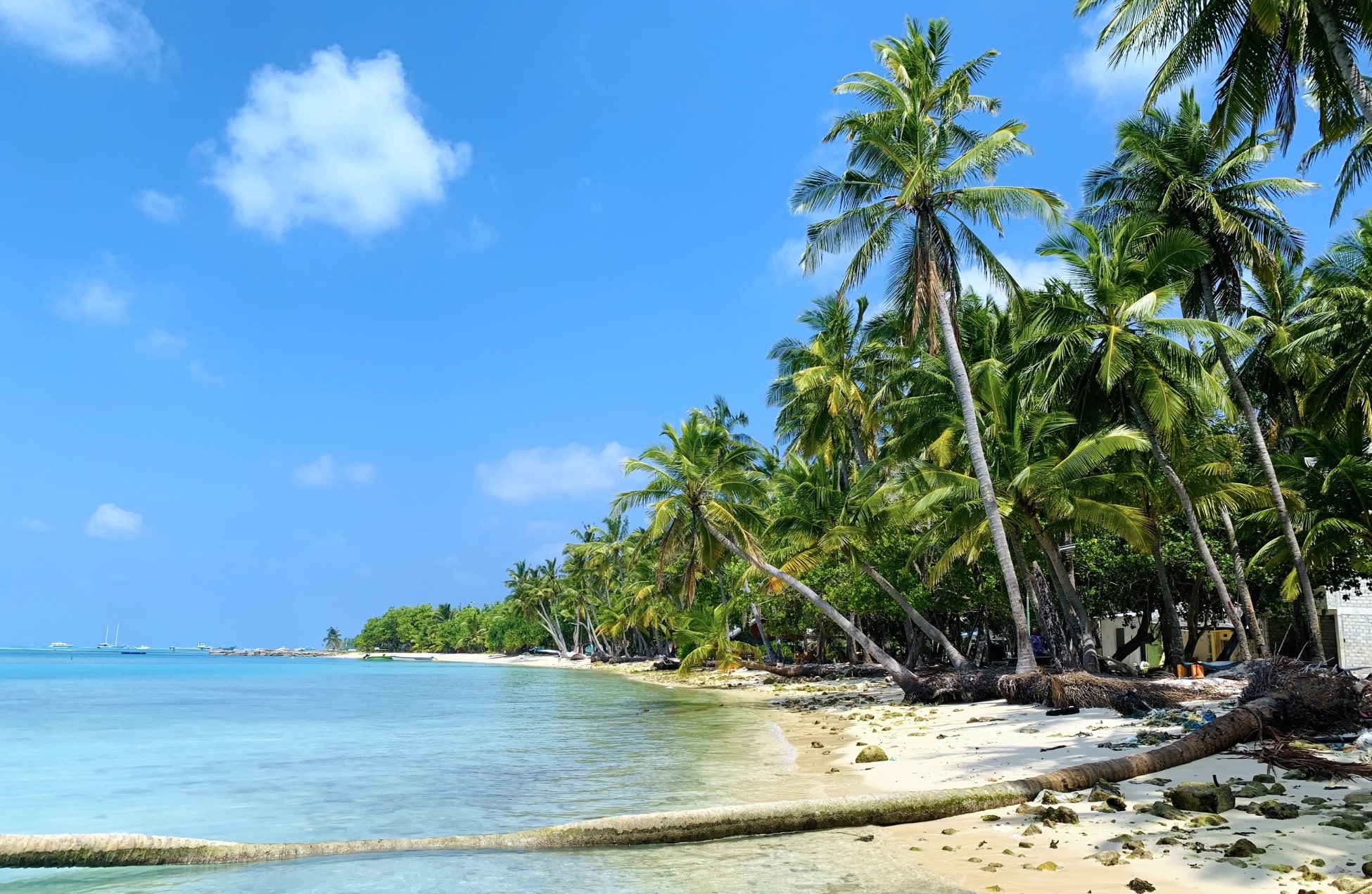 Dhiffushi maldives beach sea palm trees paradise sun