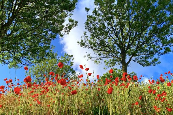 weekly blog enjoy the little things sun poppies trees