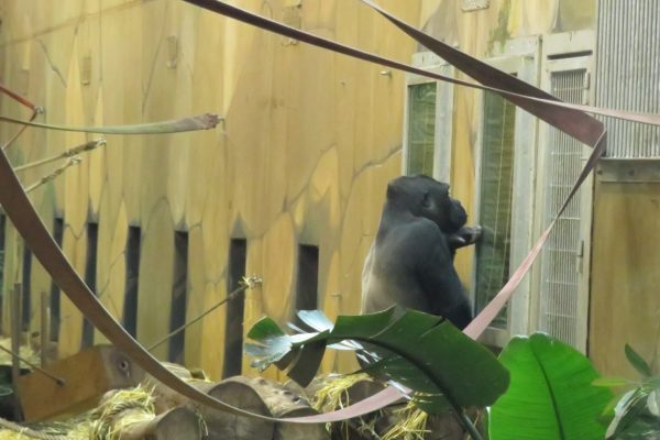 Weekly blog, zoo lockdown no freedom
